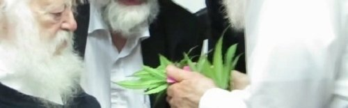Cannabis in Judaism